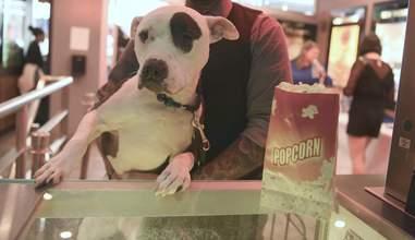 dog at movie theater next to popcorn
