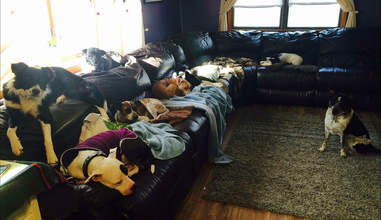dogs sleeping on couch