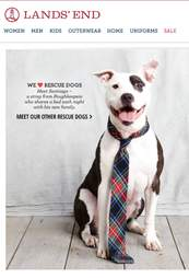 land's end ad with pit bull