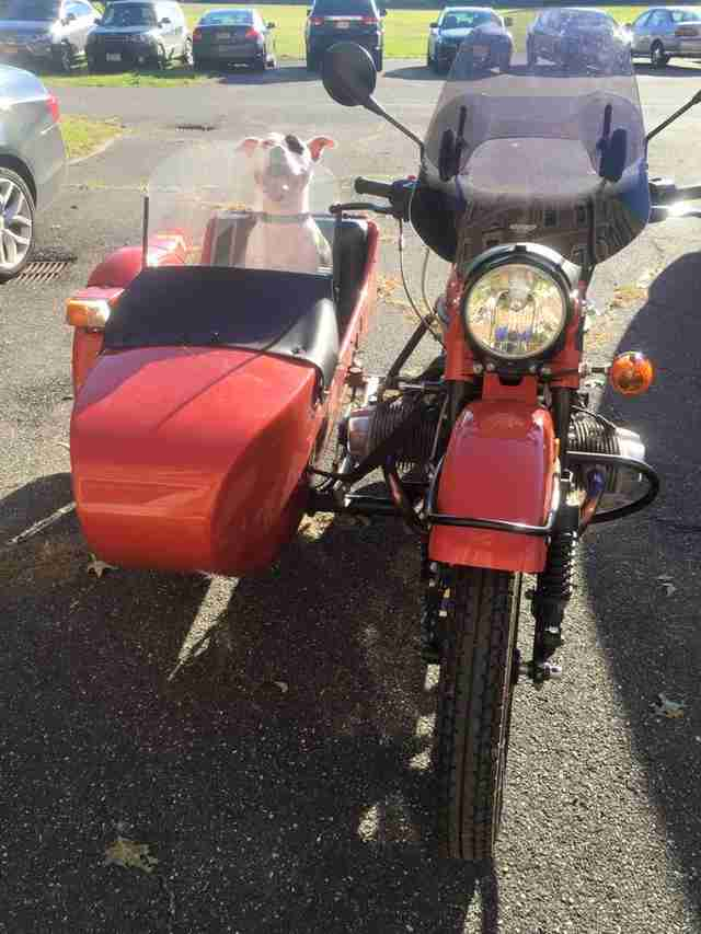 dog sitting in motorcycle sidecar