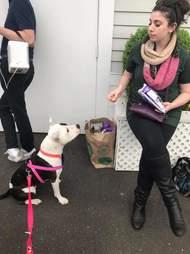 dog sitting for treat