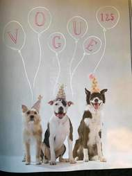 vogue magazine ad featuring pit bulls