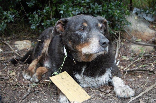 У сім'ї думали, що їх пес зник назавжди, але він повернувся з несподіваною запискою на нашийнику