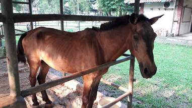 Rescued horse at stable