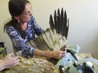 Eagle getting wing repaired