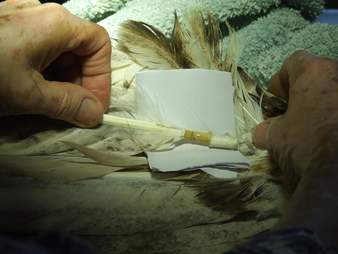 Feather being glued into place in eagle's wing