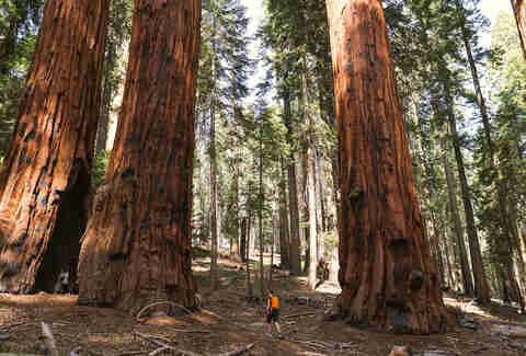 Redwood National and State Parks, California