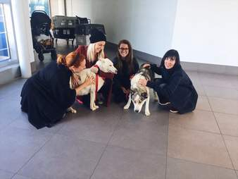 Huskies arriving in Toronto from Syria