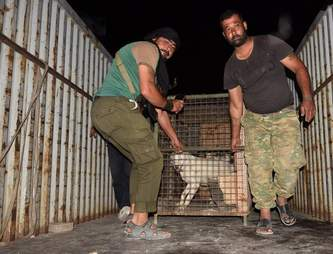 Huskies getting saved from Aleppo