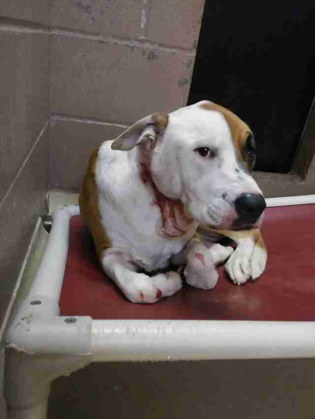 Shelter dog covered in wounds