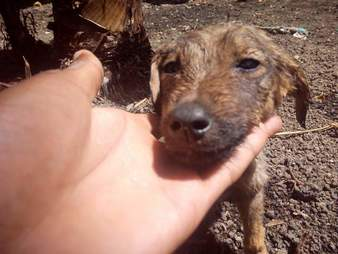 Rescued puppy on street