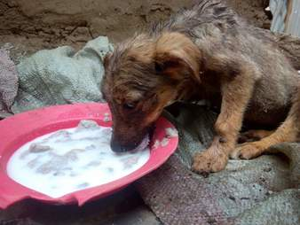 Hungry puppy eating food