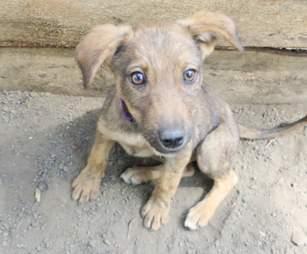 Closeup of rescued puppy