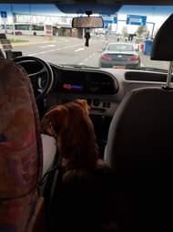 Rescue dog inside car