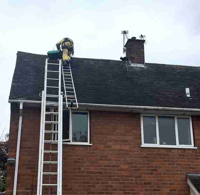 Cat Climbs On Roof Gets Stuck The Dodo