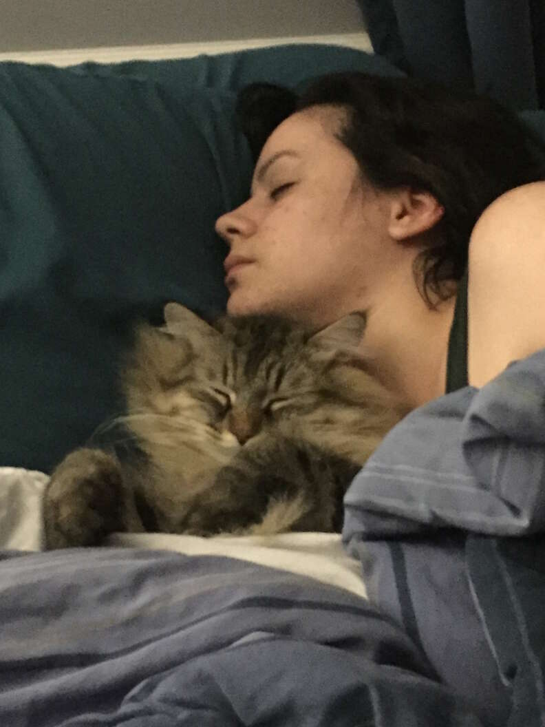 cat can tell mom is pregnant
