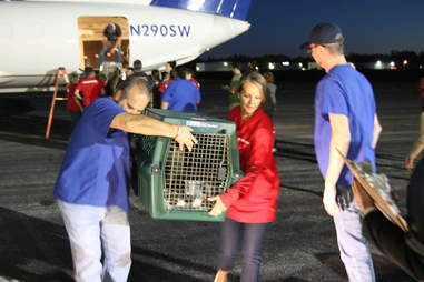 Puerto Rico dogs and cats traveling to Georgia to find homes after Hurricane Maria