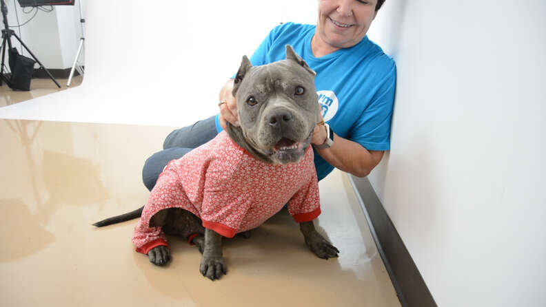Shelter dog in pajamas