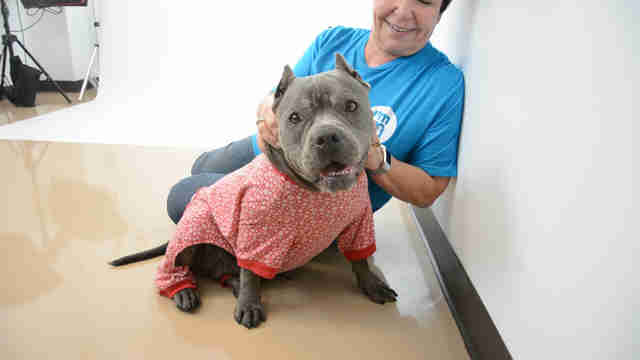 Shelter dog in pajamas