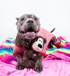 Shelter dog in pajamas on dog bed