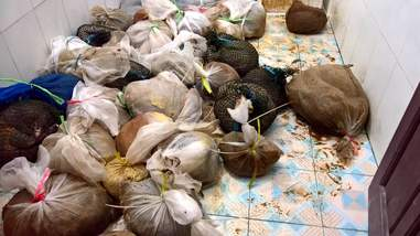 Pangolins and turtles seized from smugglers