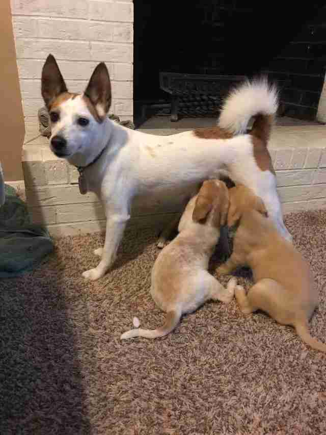 Dog nursing large puppies