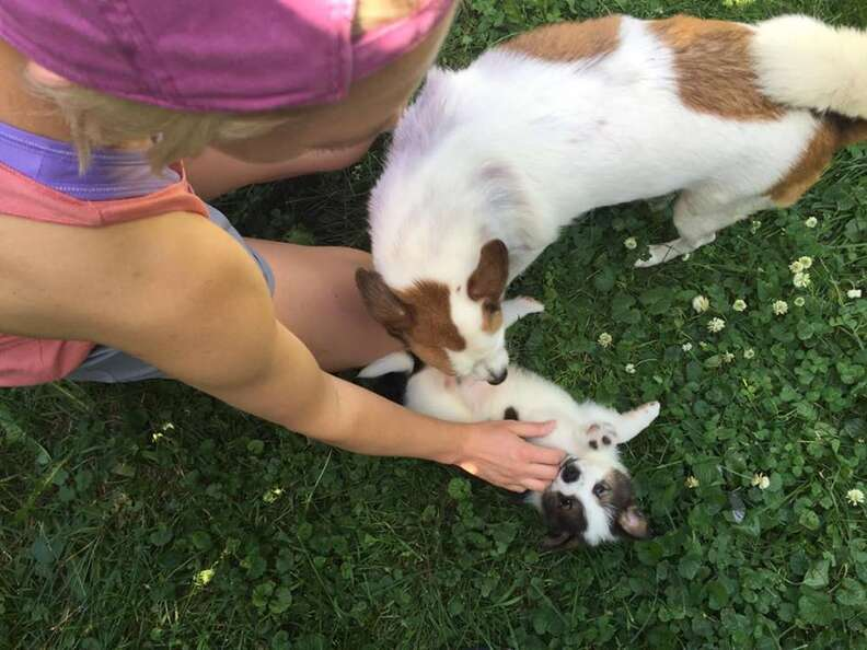 Rescue dog and puppies in yard