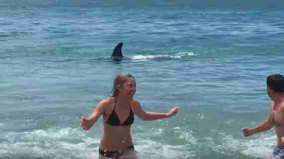 Orca surprises beachgoers
