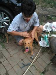Man comforting rescued dog