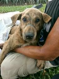 Man holding rescued dog