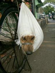 Dog tied up in mesh bag