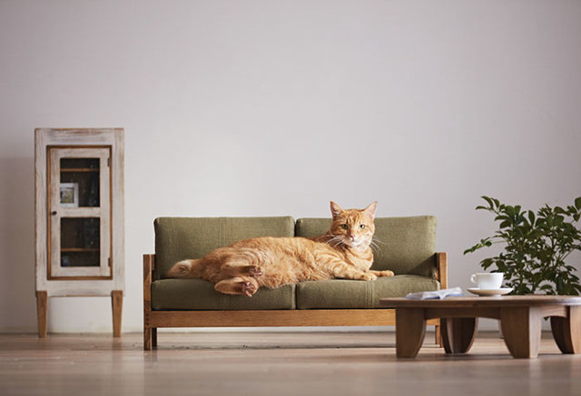 Groovy Artisanal Cat Furniture Is Now A Thing In Japan The Dodo Andrewgaddart Wooden Chair Designs For Living Room Andrewgaddartcom