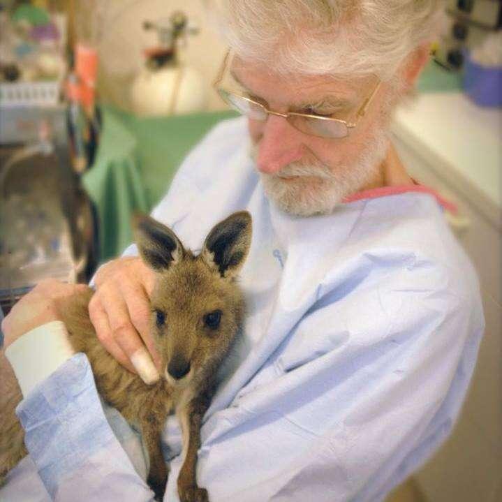 Veterinarian comforting kangaroo