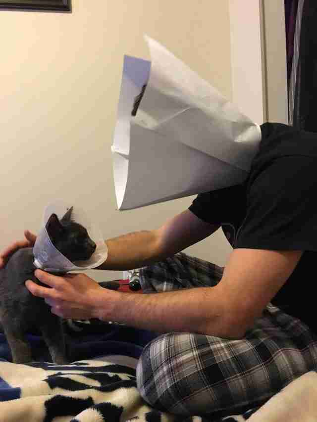 guy wears cone of shame so his kitten won t feel alone the dodo