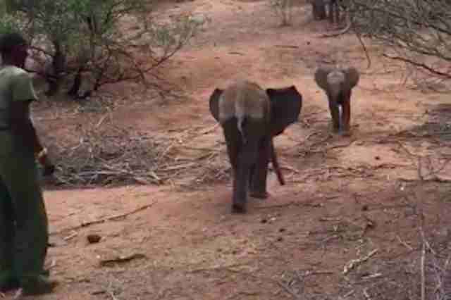 Baby elephants meeting at Kenya sanctuary