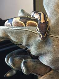 Snake found on bus