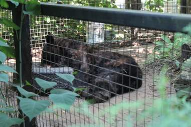 Bear inside zoo enclosure
