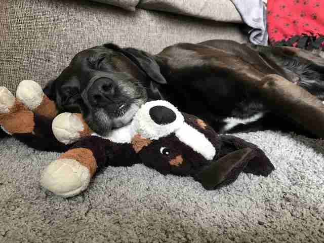 dog loves stuffed animals
