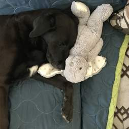dog loves stuffed animals