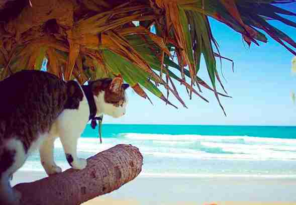 Cat under palm tree on beach