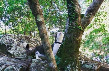 Cat rubbing against tree