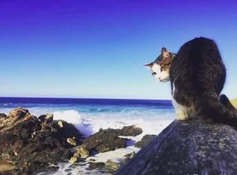 Cat at ocean