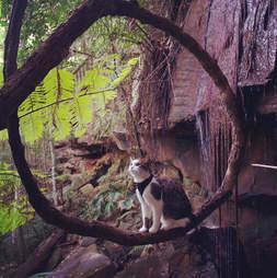 Cat in Australian bush