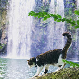 Adventure cat at waterfall