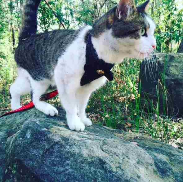 Adventure cat on leash