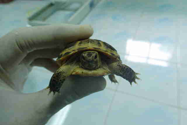 Person holding rescued turtle