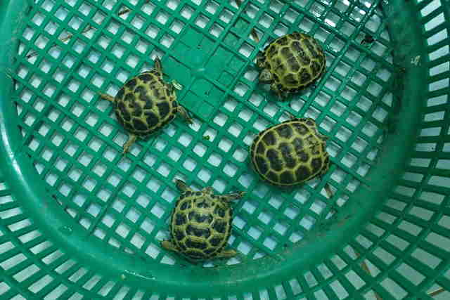 Rescued tortoises in crate