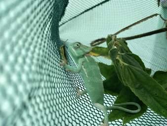 Rescued reptile in enclosure