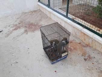 Monkeys in birdcage