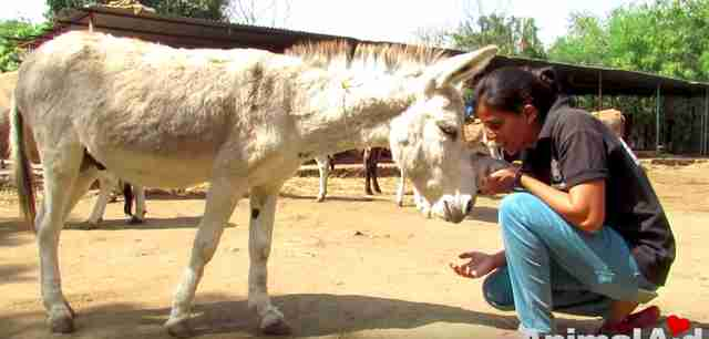 abused donkey rescued